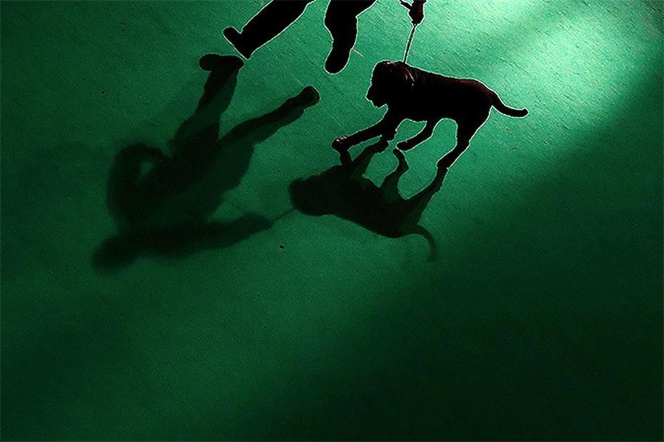 На выставке собак Crufts злоумышленники отравили сеттера ценой 75 тысяч долларов
