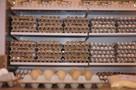 Кузбасс вошел в топ-20 регионов России по производству яиц