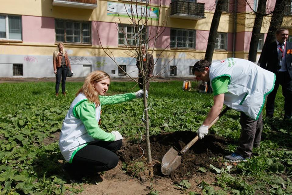 Сотрудники X5 Retail Group посадили деревья на «Аллее Памяти» в Ярославле.