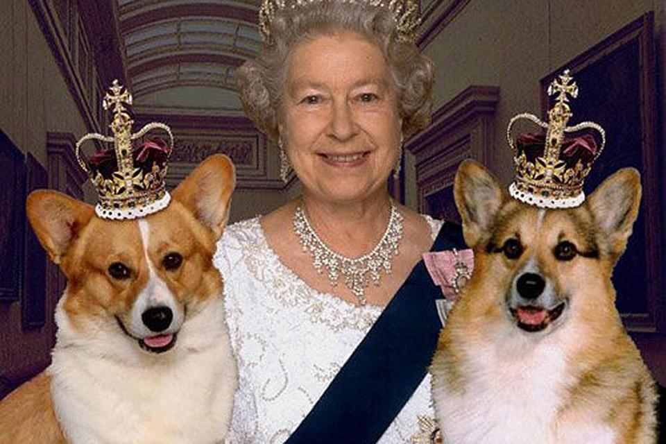 Королева Елизавета перестала разводить корги