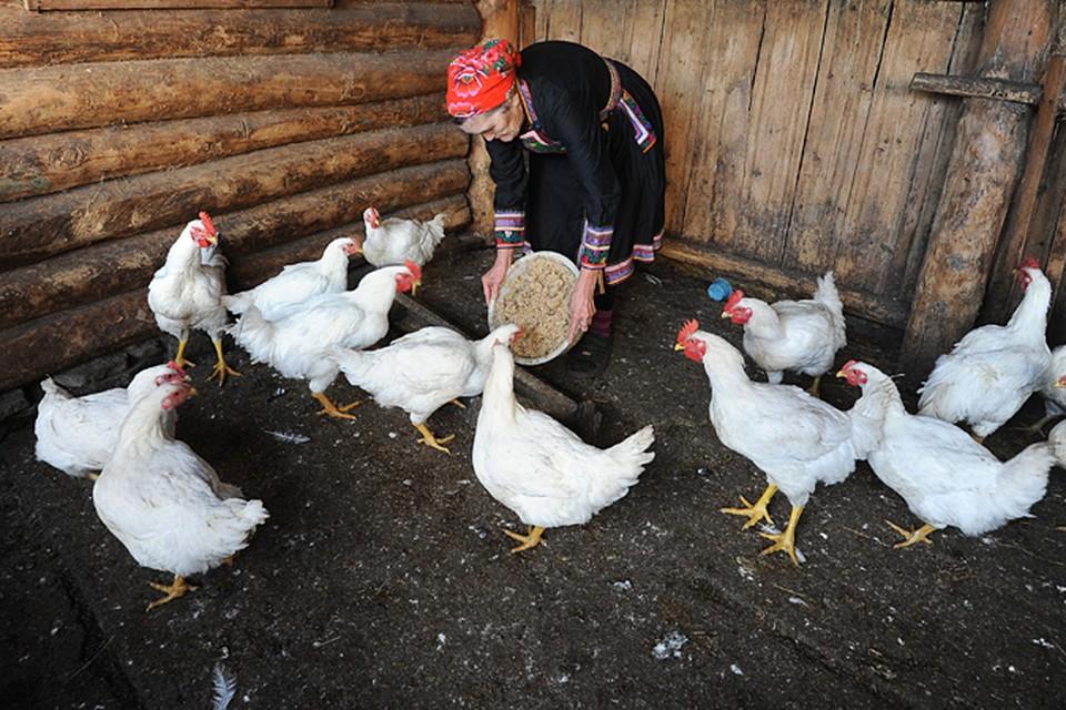 Идет вытеснение с рынка мелких хозяйств в пользу крупных агрохолдингов