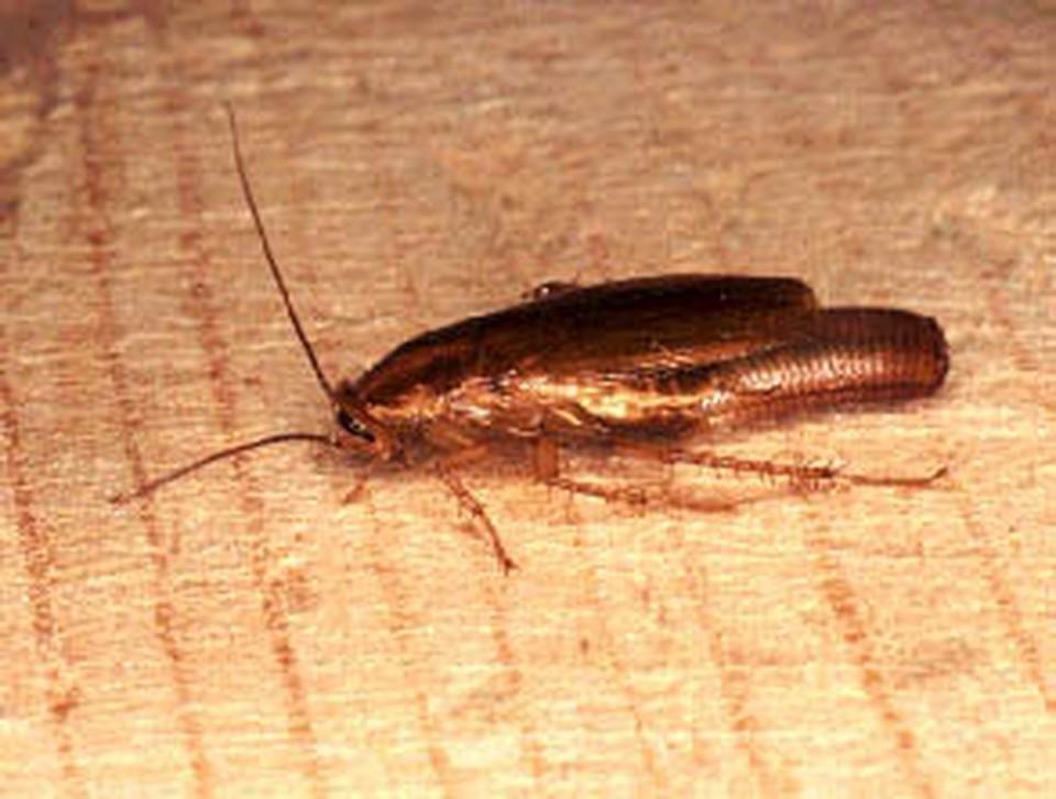 Мухи и тараканы заполонили производственный цех.