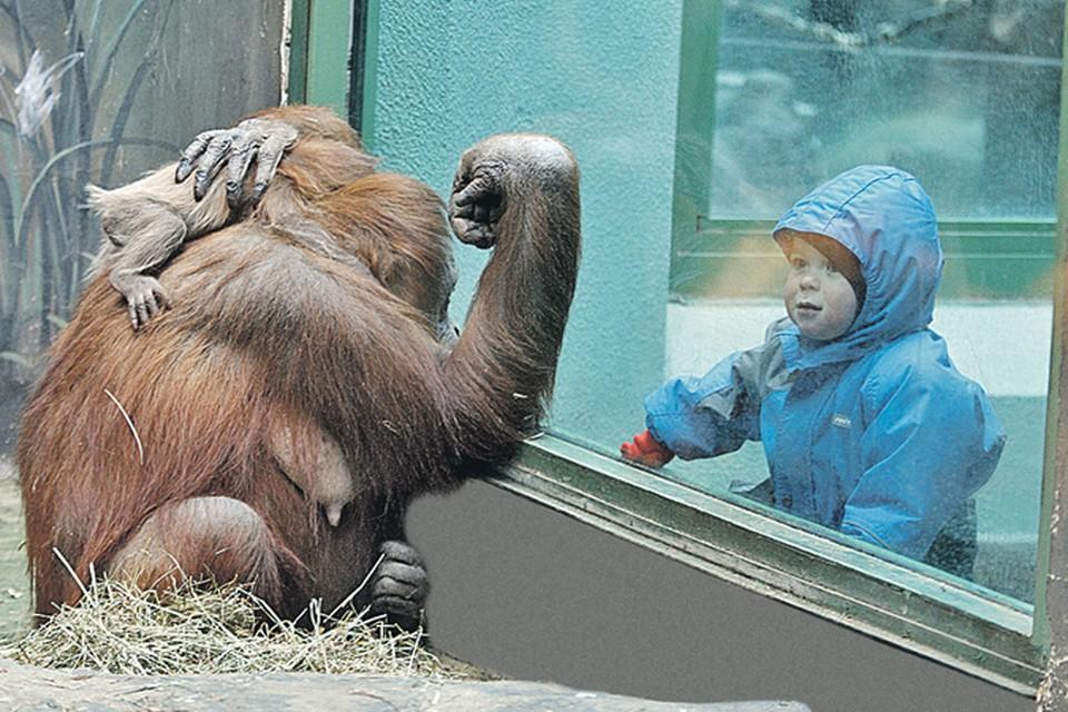 Чтобы в следующем жизненном цикле обезьяна относилась к вам благосклонно, надо узнать ее поближе. Фото: Фотобанк Лори
