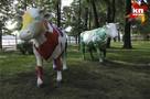 Фоторепортаж: в Летнем саду в Ижевске появились разноцветные коровы