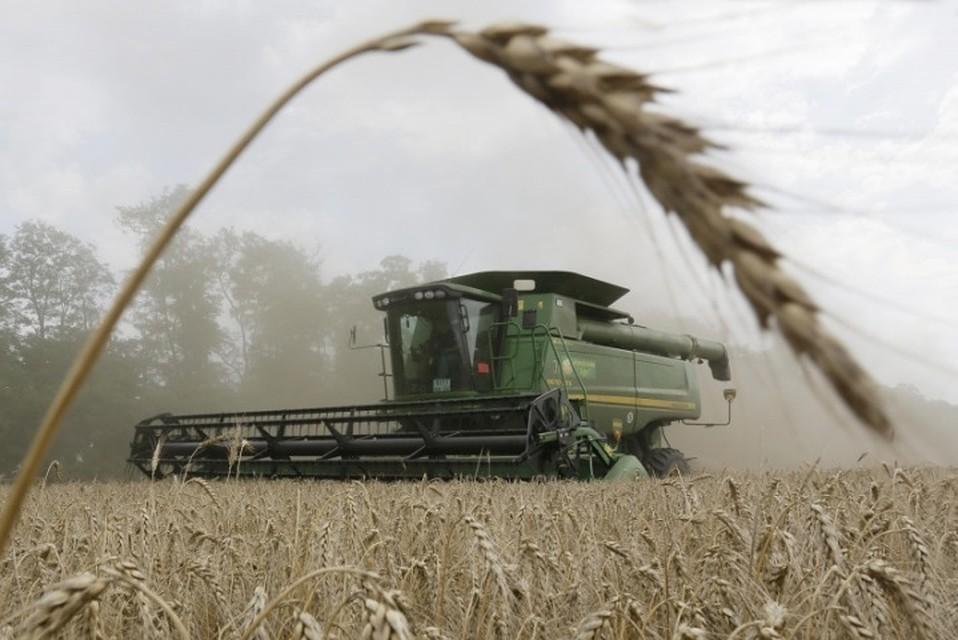 Лидские аграрии убрали 10% площадей, отведенных под зерновые и зернобобовые культуры