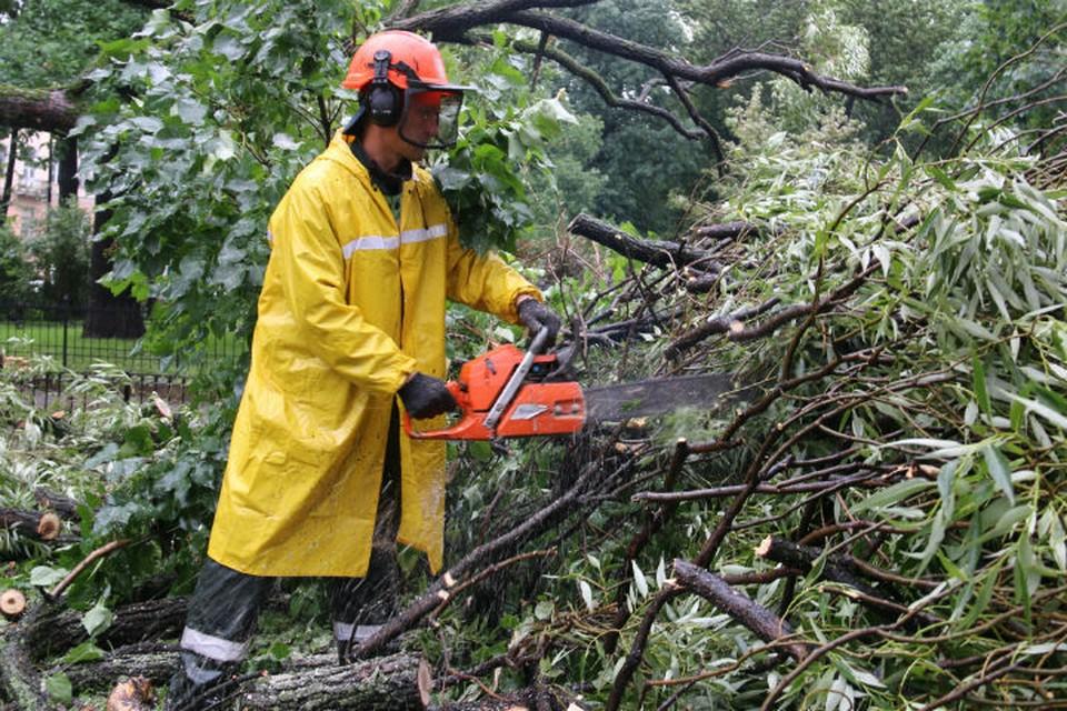 Деревья пришлось распилить Фото: комитет по благоустройству