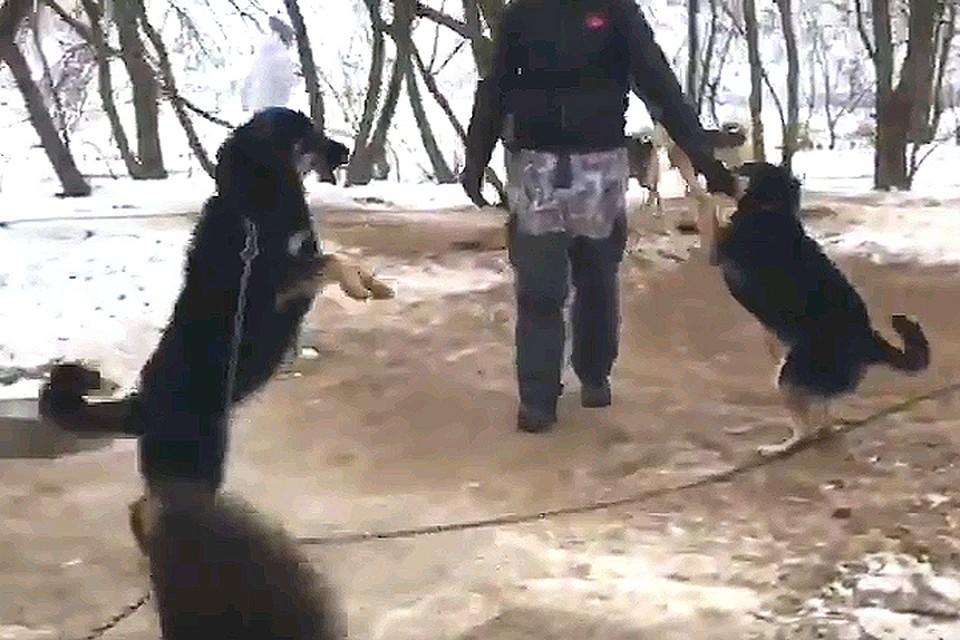 Зоозащитники шокированы условиями содержания собак в «Эко хаски парке».