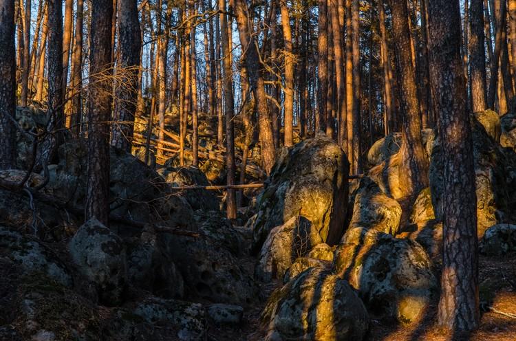 Сызранский район: сквозь каменные джунгли