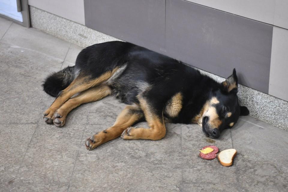 И жалко бездомных животных, и не вмешиваться в ситуацию нельзя