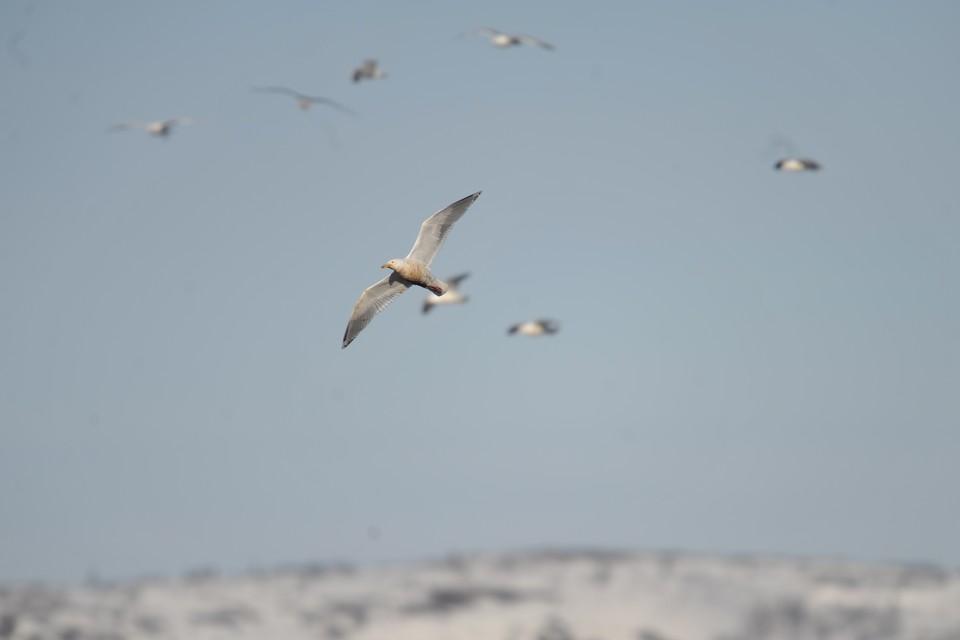 В районе Сочи много птиц, но их количество нормально для этого времени года