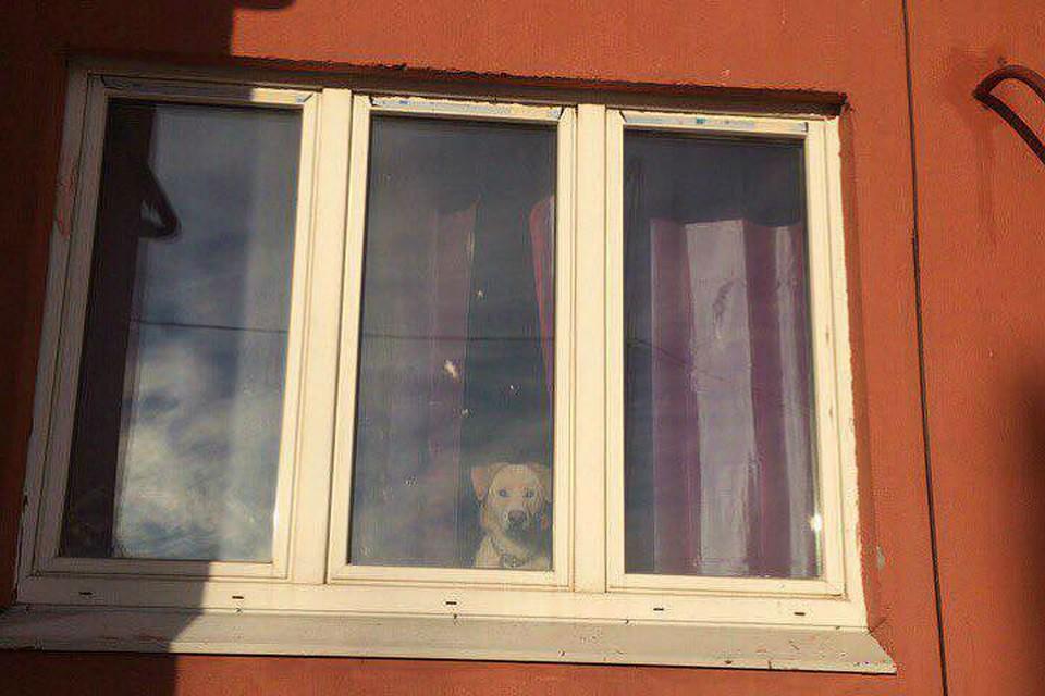 Собака тосковала целую неделю. Фото: Елена ШУЛЬГА.