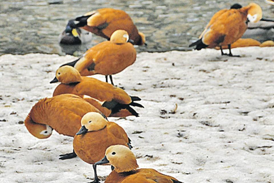 Перелетные птицы перестали улетать из Москвы в теплые края
