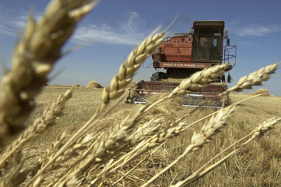 Сейчас Россия бъет все рекорды по сбору зерна
