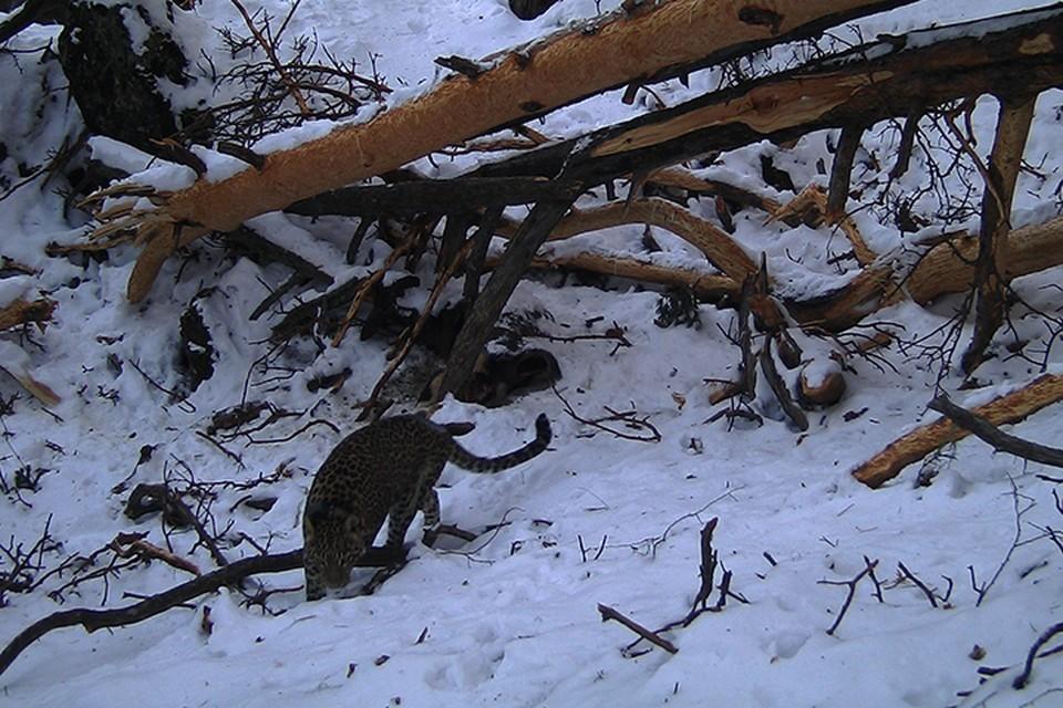 Фото: пресс-служба АНО «Центр природы Кавказа»