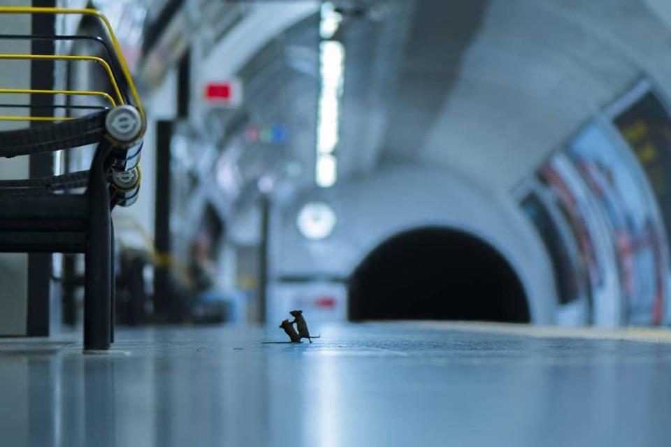 """Драка мышей в лондонском метро стала лучшей фотографией в номинации """"снимок дикой природы 2019"""". Конкурс проводил Лондонский музей естествознания, фотография британца Сэма Роули оказалась вне конкуренции. Фото: Sam Rowley@www.nhm.ac.uk"""