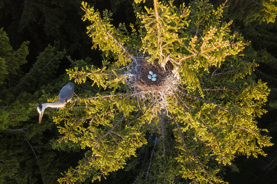"""""""Цапля и гнездо"""". Фото: Дмитрий ВИЛЮНОВ"""