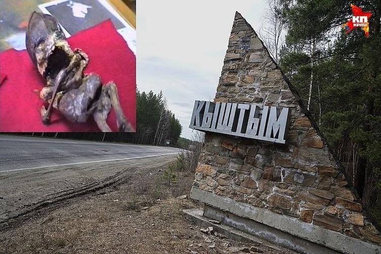 В мае 2016 года исполнилось 20 лет, как в уральском городке Кыштыме нашли гуманоида Алешеньку
