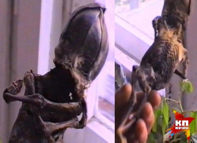Патологоанатом, осматривавший мумию, сделал вывод, что Алешенька – не человек