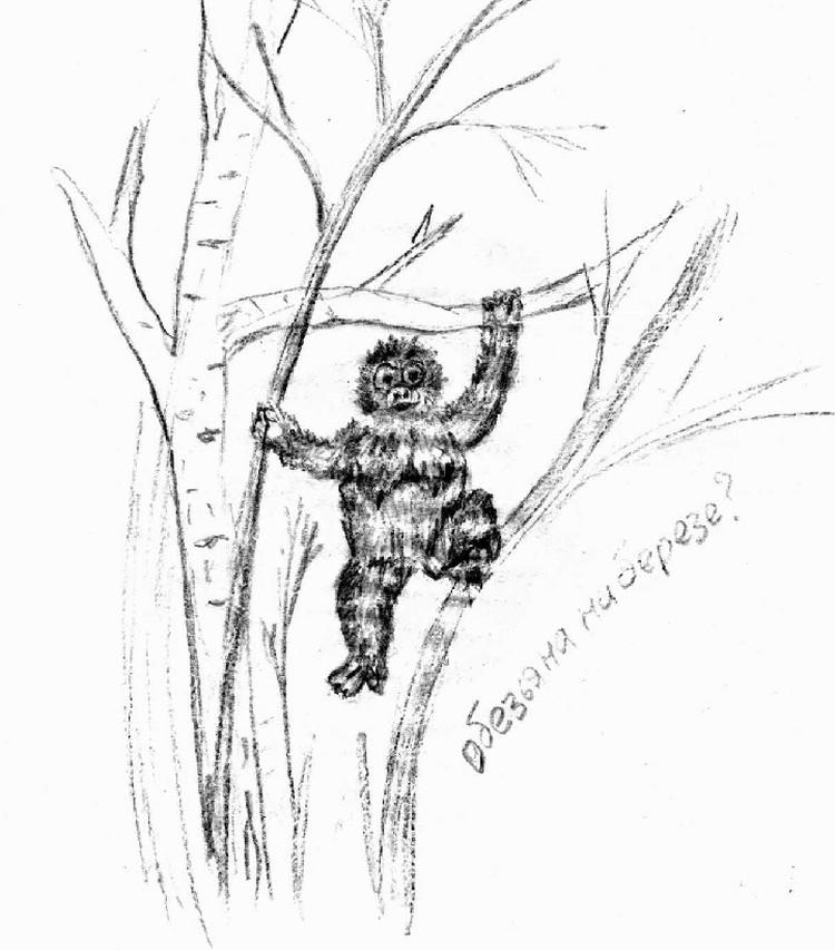 Так, по описаниям очевидцев, выглядела калужская обезьяна.