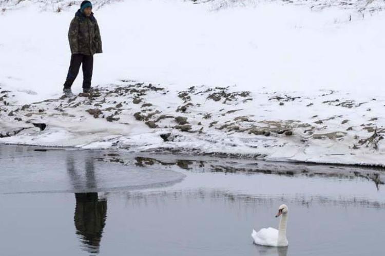 Местные жители подкармливают лебедя, оставляя еду на берегу