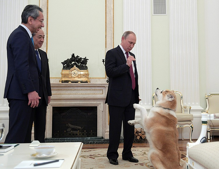Собаку породы акита-ину российскому лидеру подарил губернатор северной японской префектуры Акита Норихисом Сатакэ. Фото: сайт Кремля.
