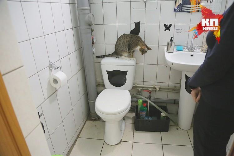 Сперва нужно приучить котенка к лотку