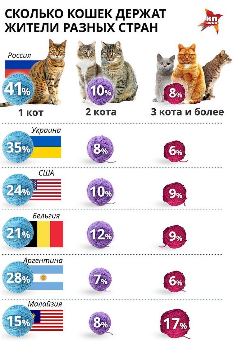 Россияне оказались главными любителями кошек в мире.