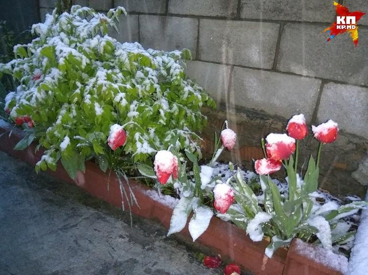 Снег начал идти еще ночью