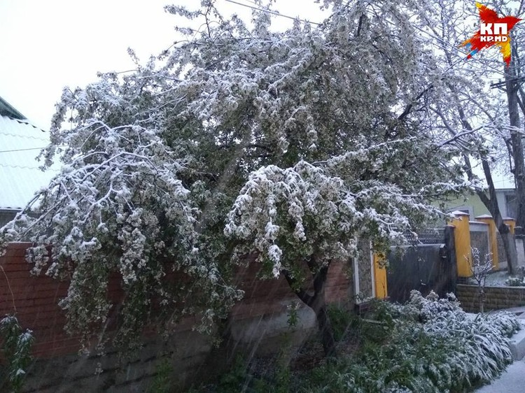 Деревья тоже покрылись снегом.
