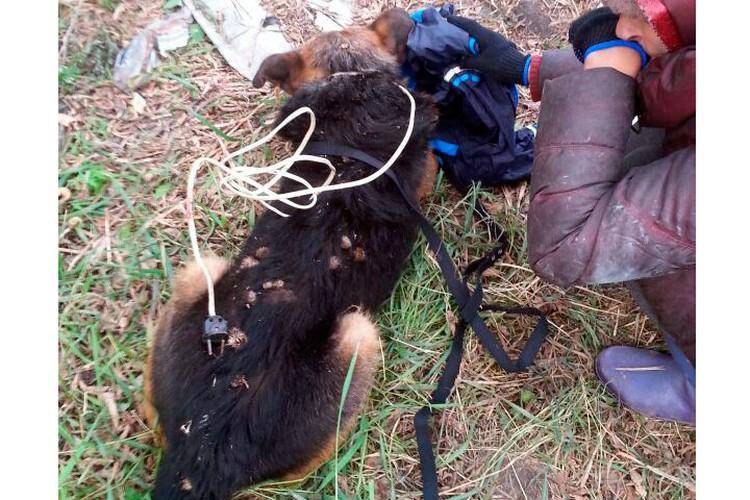 Шея пса была стянута железной удавкой, голова изранена.