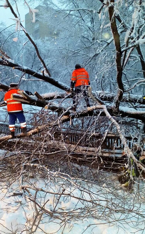 С Филевской линии пришлось убирать упавшее в 23.15 дерево - ствол упал на поезд, в котором, к счастью, не было пассажиров