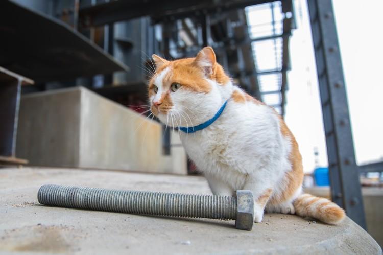 Кот присматривает за порядком на стройке: Фото: Кот Моста/Facebook