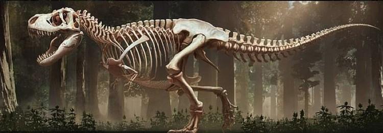 Сначала палеохудожники воссоздали скелет...