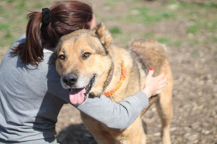 """Апполон нашел свой дом. Теперь его зовут Малыш Фото предоставил благотворительный фонд """"Собаки, которые любят""""."""
