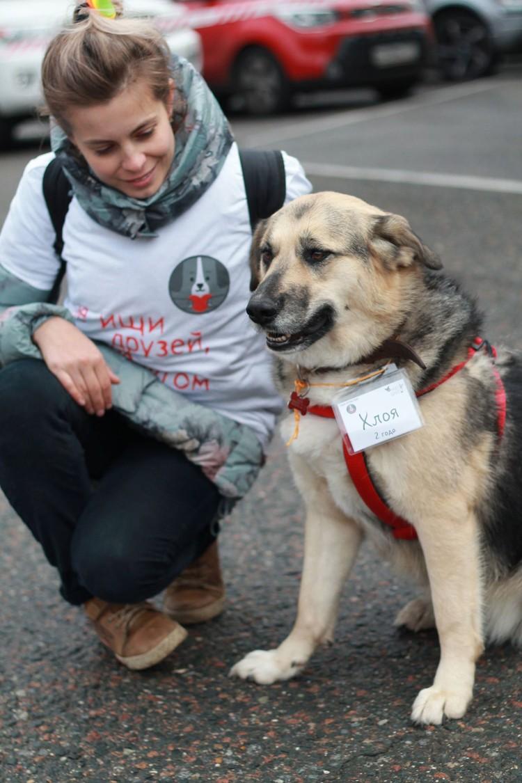 """Волонтеры ежедневно помогают 1700 собакам в приюте. Собака Хлоя тоже ищет дом Фото предоставил благотворительный фонд """"Собаки, которые любят""""."""