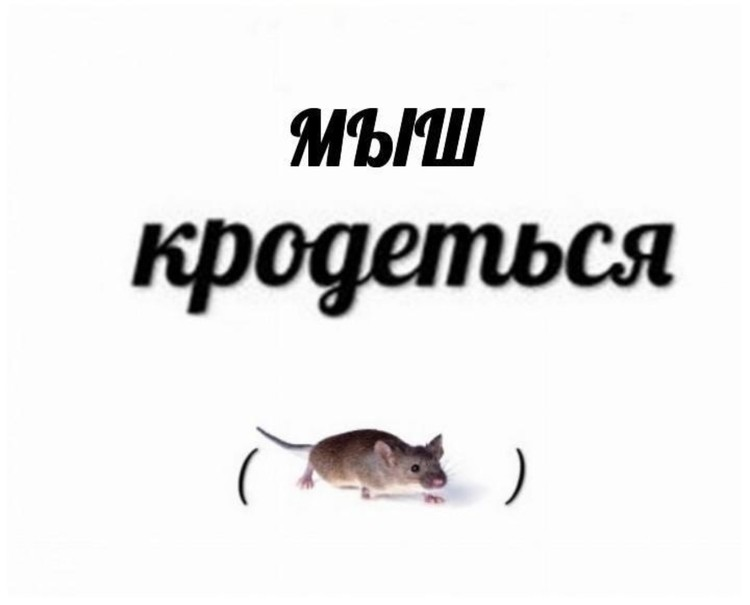 """""""Мыш"""" потерял мягкий знак и стал одним мз самых популярных персонажей рунета"""