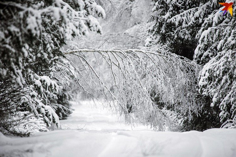 Зимой в лесу фантастически красиво!
