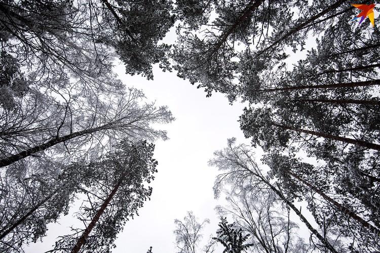 Можно часами гулять по лесу и смотреть в небо, главное - не замерзнуть.