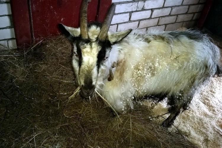 Несколько животных не дождались помощи и умерли от голода. Фото: псковская волонтерская организация «Зоозащита».