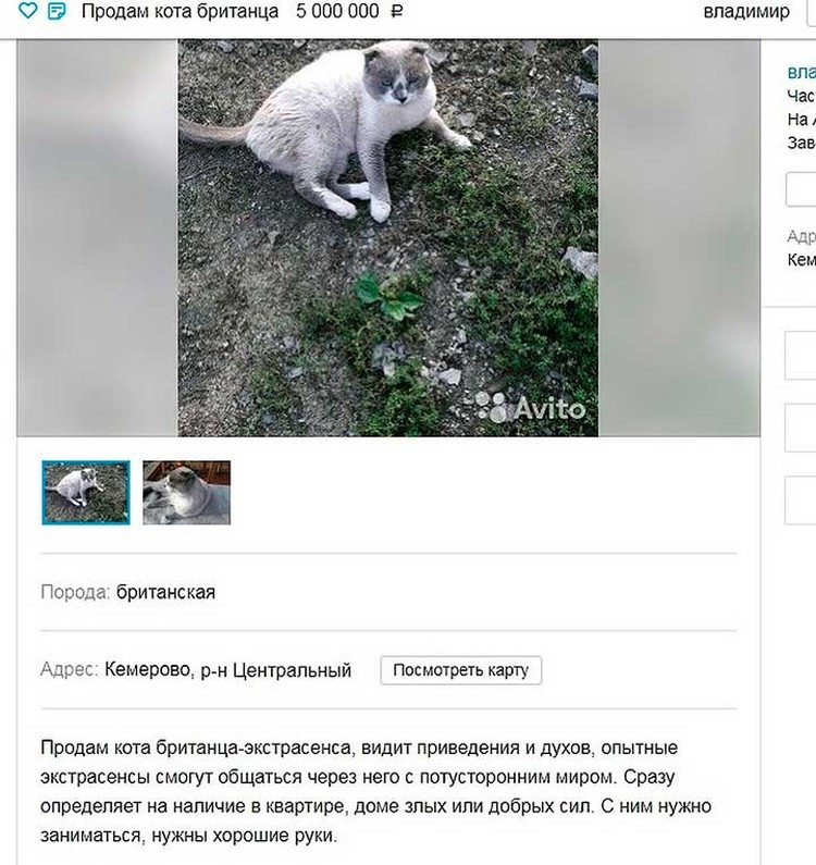 Продавать кота Владимир передумал. То ли желающих выложить 5 млн не нашлось, то ли хозяин решил, что защитник от злых духов ему самому нужен.