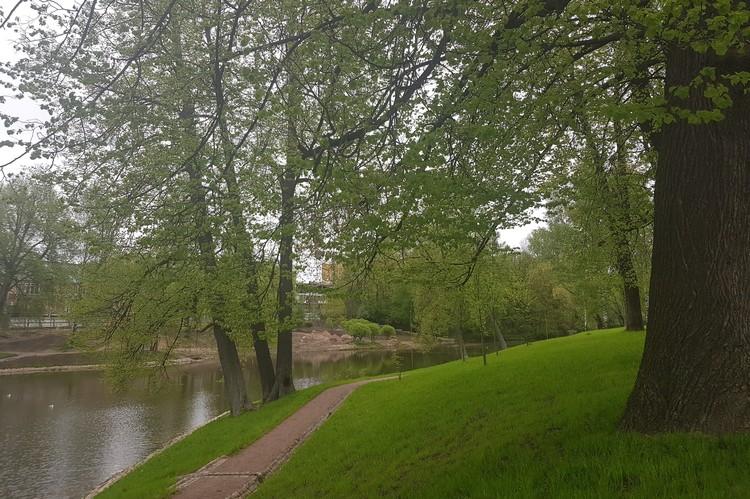 В историческом парке в Коломягах растут двухсотлетние липы. Фото: Пресс-служба Комитета по благоустройству.
