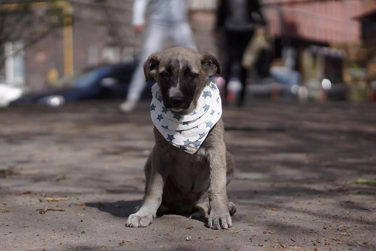 Это милый Хаммер Фото: Сайт Рекламные псы
