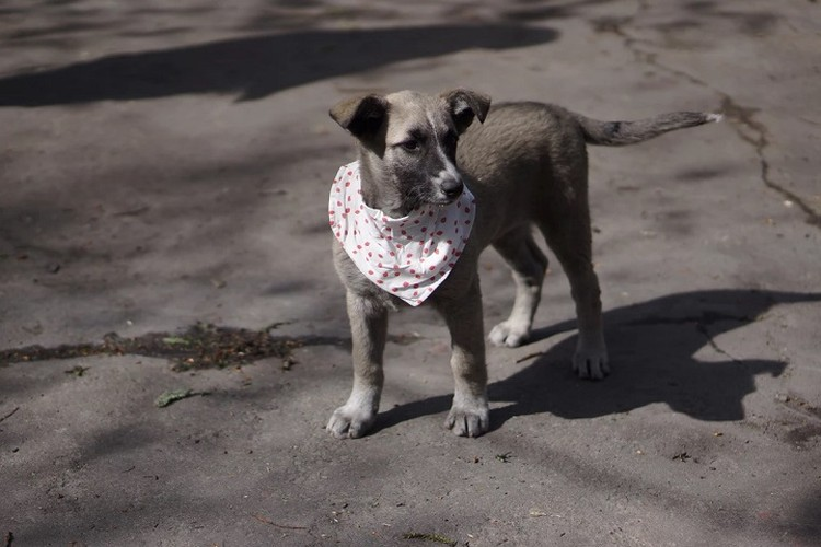 Веселая девчонка Клио Фото: Сайт Рекламные псы