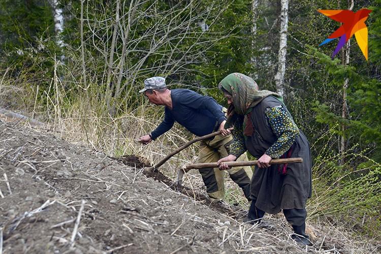 Инспектор заповедника помогает Агафье вскопать огород