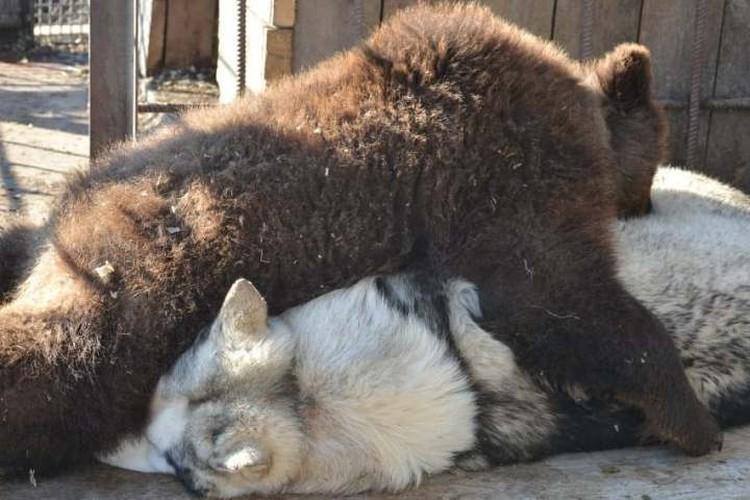 Сладкая парочка еще даже не догадывается, что проводит вместе последние деньки. Фото: Instagram «Сибирского зоопарка».