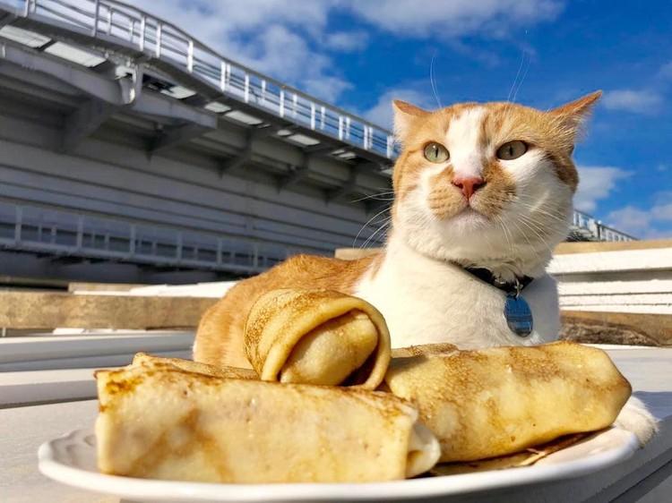 ФОТО: инстаграм cat_the_most