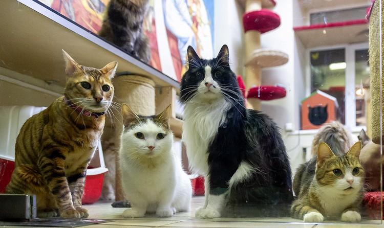 Многие коты обожают зоогостиницы - ведь здесь можно поиграть с собратьями.