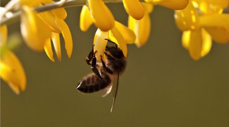 Без меда проживем, а без пчел - нет.