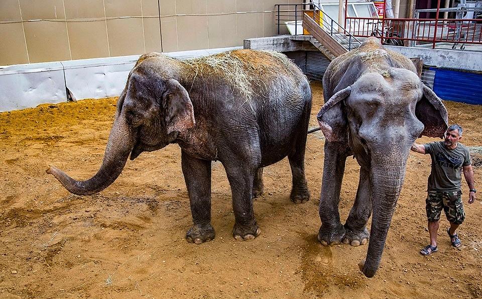 какие препараты снижают вес африканского слона