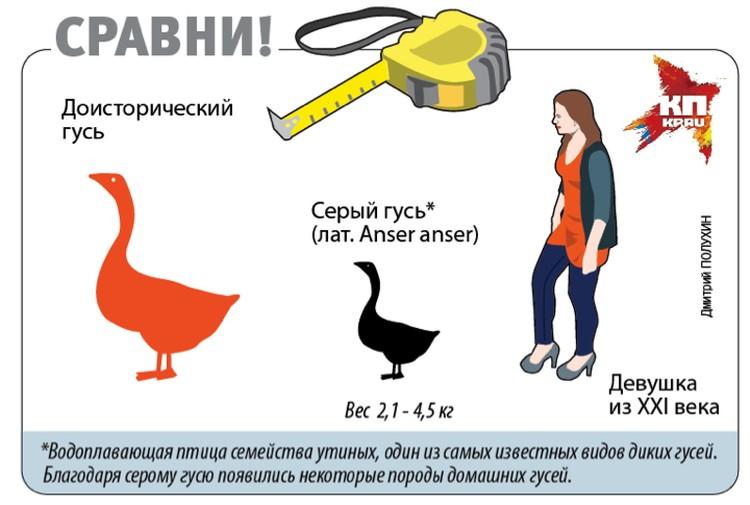 Людям вряд ли довелось отведать гигантских гусей.